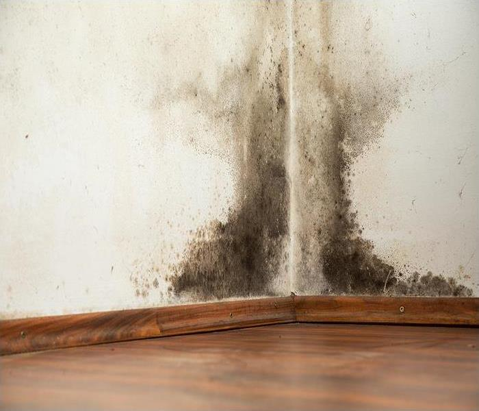 Mold Remediation Common Places for Mold to Grow